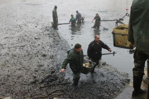 Výlov rybníku - Fučík 2019